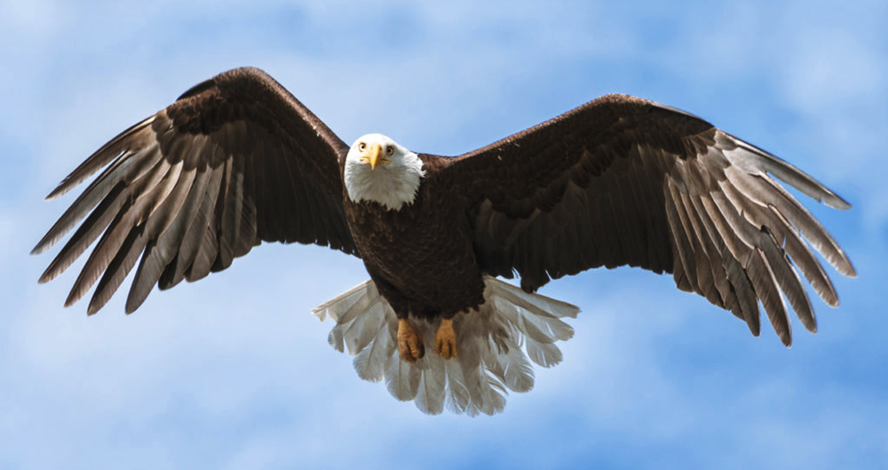 La transformación del águila