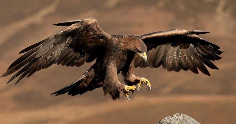 El águila nos enseña sabiduría
