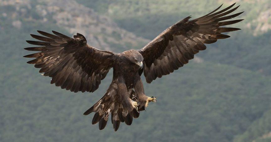 Transformación del águila