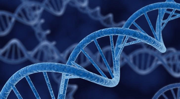 No son los genes, sino las condiciones materiales las que determinan lo que hemos de comer