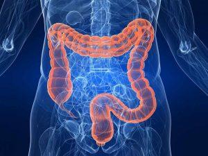 Intestino grueso, el gran órgano de desintoxicación