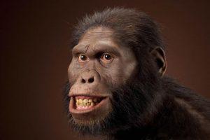 Alimentación del Australopithecus africanus