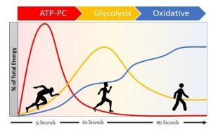 Ventajas y desventajas de las diferentes vías metabólicas