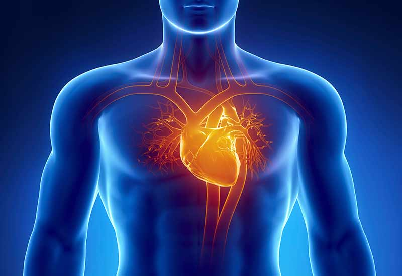 La actividad preventiva de las enfermedades cardiovasculares está entre la más reconocidas.