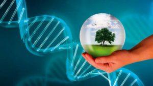 La alimentación de los homínidos: genética, ambiente o ambas