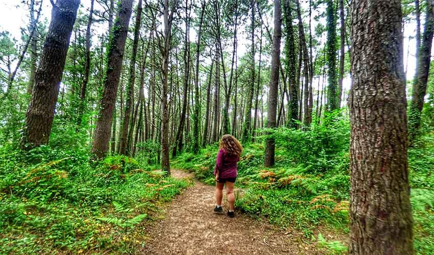 Paseo por el bosque