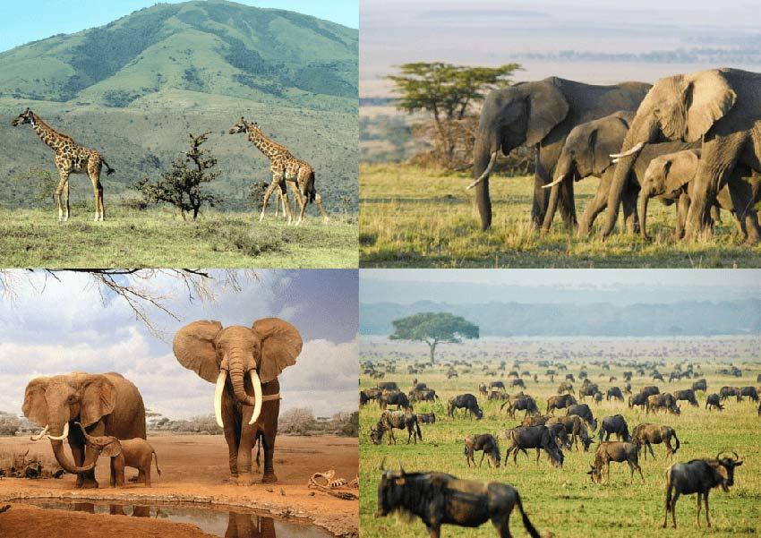 Exuberante vida animal en la sabana africana