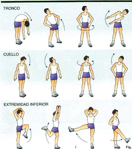 Movilidad músculo-articular