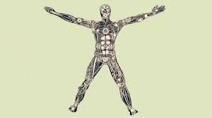 El cuerpo máquina del modelo biomédico