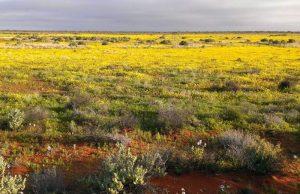 La extrema estema, de plantas herbáceas y escasas precipitaciones. Hábitat de Homo erectus