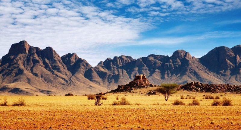 Homo erectus apareció en la sabana africana