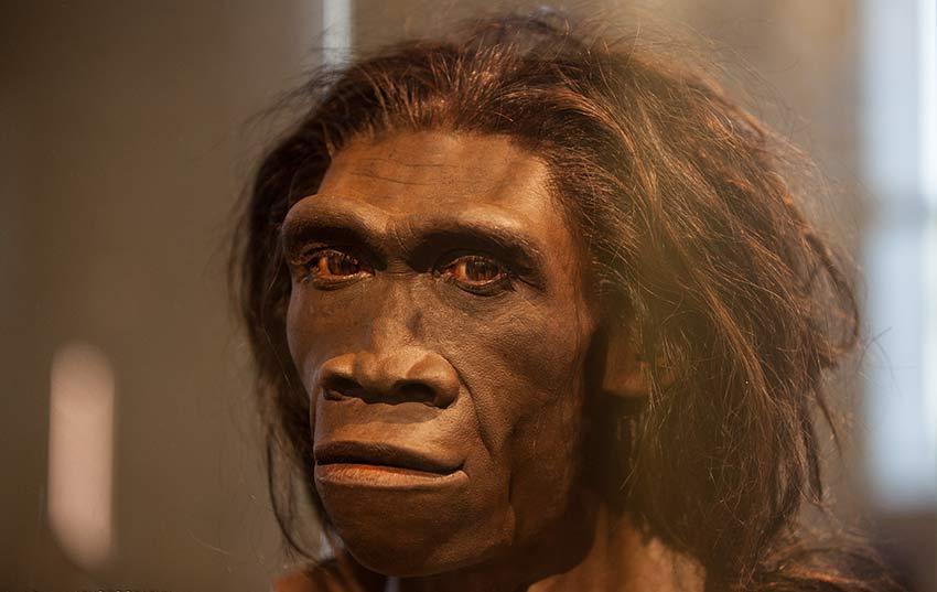 Homo erectus u hombre erguido