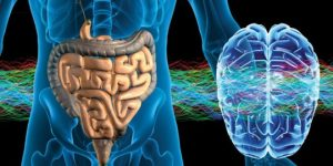 Cerebro e intestinos. Conexión evolutiva