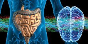 Cerebro e intestinos. Conexión evolutiva