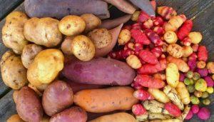 Importancia de las raíces, bulbos y tubérculos en la evolución humana