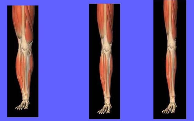 Beneficios del entrenamiento de la fuerza en la prevención y tratamiento de la sarcopenia