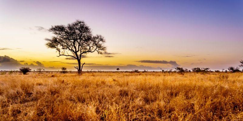La sabana, lugar de nacimiento del Homo Sapiens
