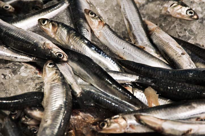 Sardinas, fuente de omega 3 y uno de los alimentos que protegen del sol