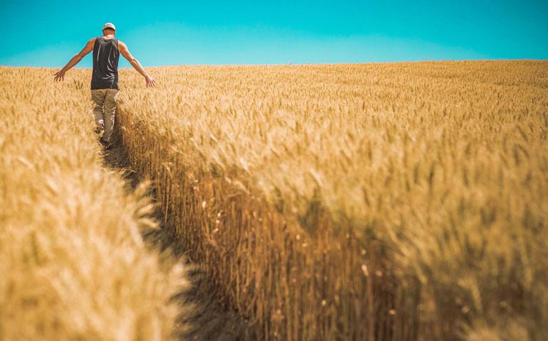 Agricultor paciente, confiado a que llegue el momento de la siega