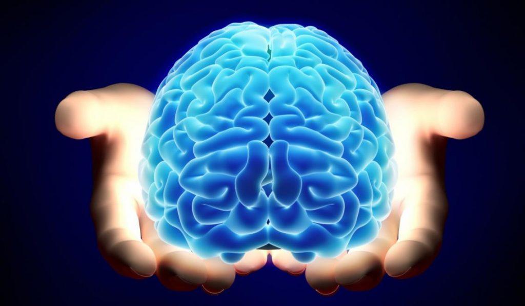 El cerebro y las grasas