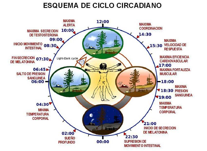 Sincronizar los ritmos biológicos con los de la naturaleza forma parte de un estilo de vida saludable