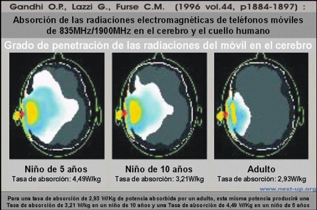 Penetración de las radiaciones electromagnéticas del móvil en el cerebro