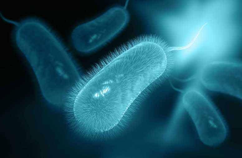 Helicobacter pylori ¿bacteria invasora o aliada?