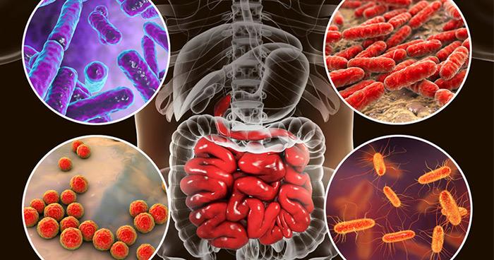 probióticos para recobrar una sana microbiota y tratar el intestino permeable