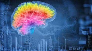 Mejore su salud cerebral con ginseng americano