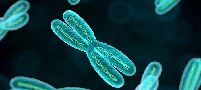 Modificar el DNA a través de palabras y sonidos