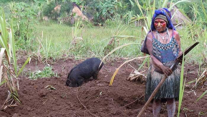Tsembaga, dietas del mundo muy ricas en hidratos de carbono