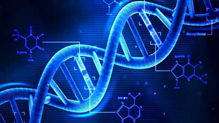 Más allá de la estructura molecular del ADN