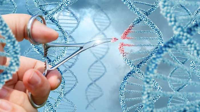 Ingeniería para modificar el DNA