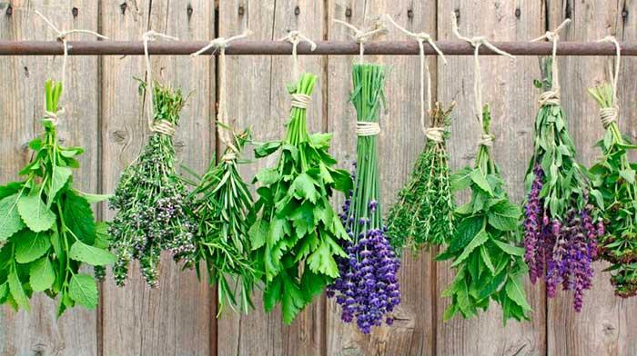 Procedimiento de secado de plantas medicinales