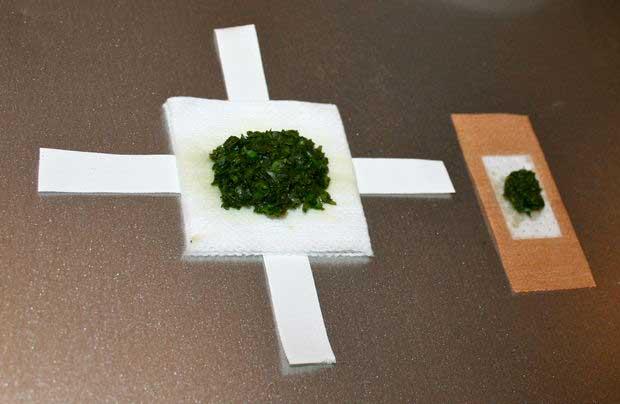 Cataplasma de plantas medicinales