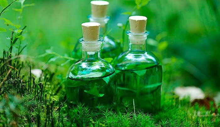 Fitoterapia: Extracto de plantas medicinales