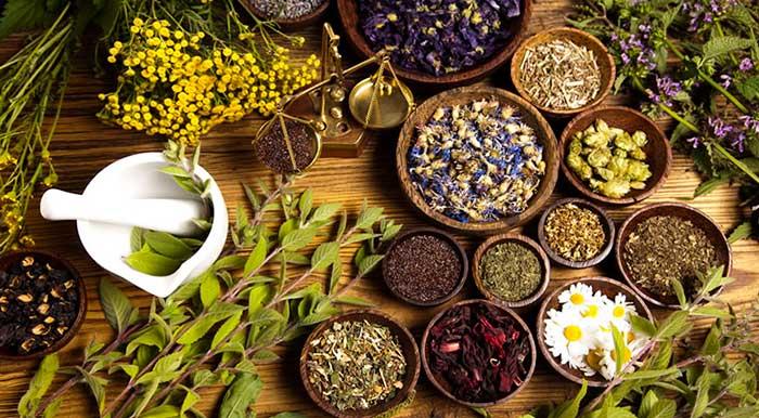 Fitoterapia, herbología y plantas medicinales