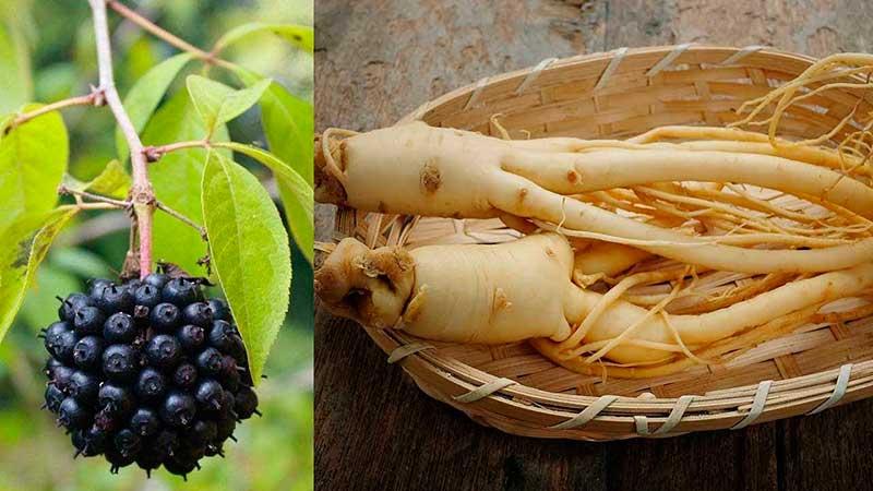 Partes botánicas del eleuterococo.